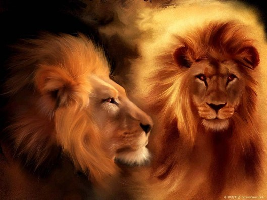 Lion_Wallpapers