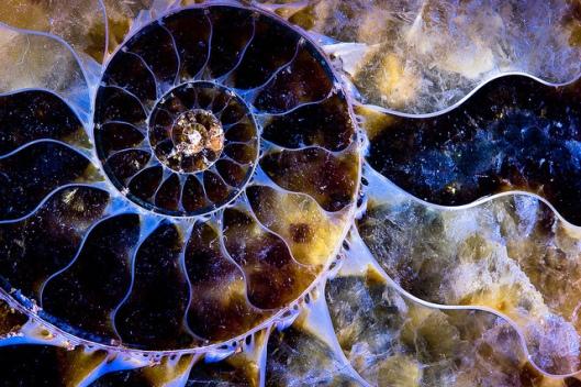 Spiral of evolution