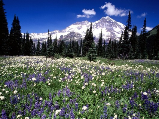 Season beauty Mount Rainer Washington